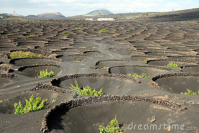 Traditional Winery on Lanzarote