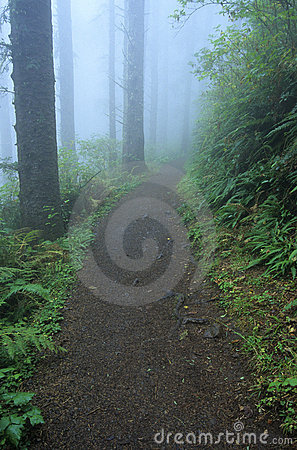 Free Trail 23 Royalty Free Stock Photo - 524525