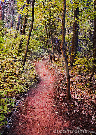 A Trail in Fall Colors