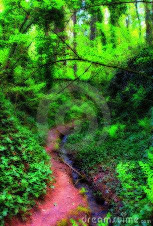 Trail Into Forest