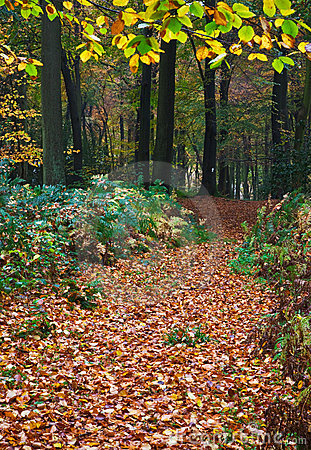 Trail Through A Forest In Autumn Stock Photography - Image: 14205112