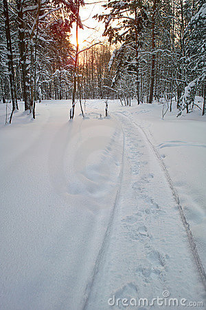 Free Trail In The Snow Stock Photos - 12413903