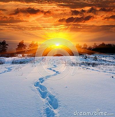 Free Trail On Snow Royalty Free Stock Photo - 28333635