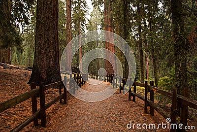 Trail in rain