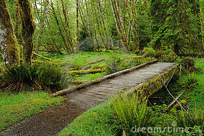 Trail in rain forest