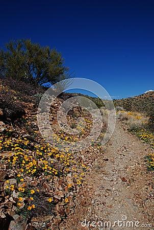 Trail to Wasson Peak