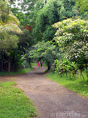 Trail in a tropical park