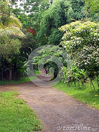 Trail in a tropical park