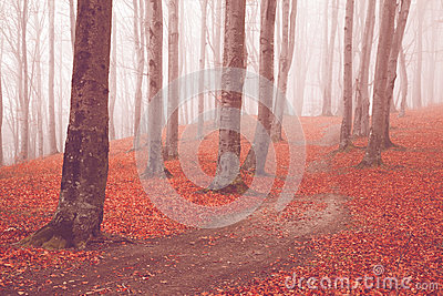 Trail trough a autumn forest with fog