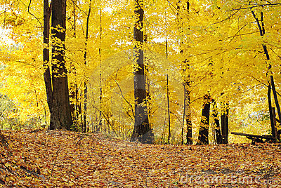 Trail through yellow autumn trees