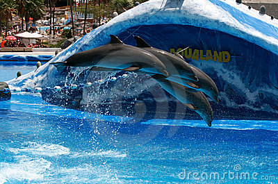 Trained dolphins jump in aquarium - Aqualand Editorial Image