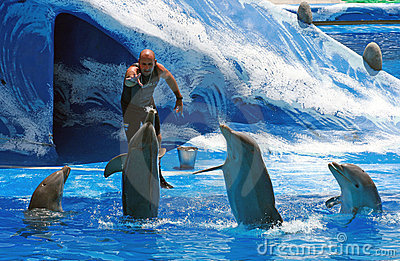 Trainer with dolphins - Aqualand Tenerife Editorial Stock Image