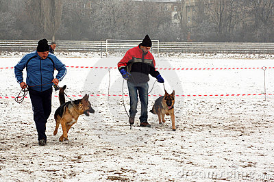 Trainers with Alsatian dogs