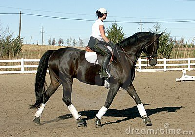Training Dressage