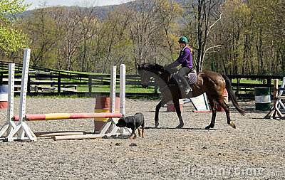 Training horse in arena with dog