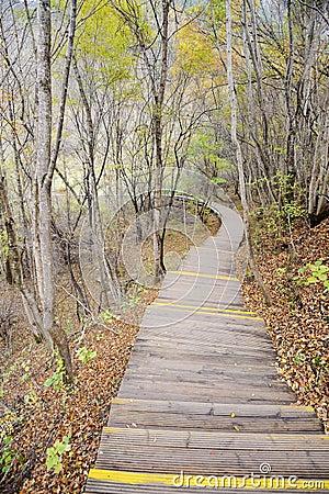 Trajeto de madeira na floresta do outono