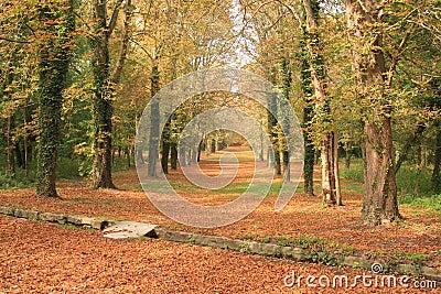 Trajeto do outono através de uma floresta