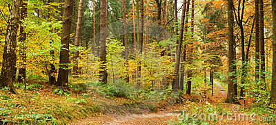 Trajeto em floresta misturada do outono