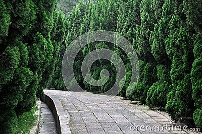 Trajeto na bordadura do jardim com árvore de cipreste