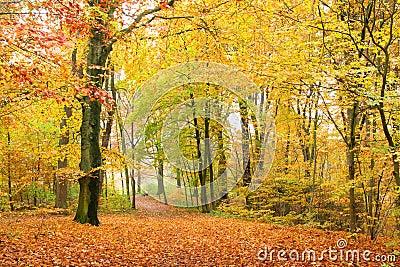 Trajeto na floresta do outono