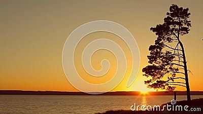 Tramonto ed albero solo sul fiume La Russia stock footage