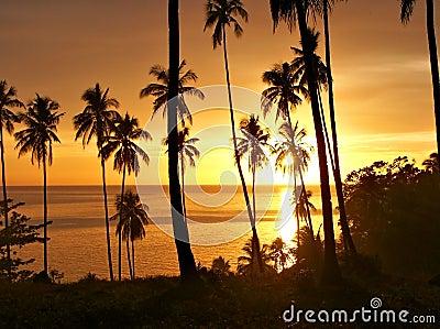 Tramonto tropicale con la siluetta degli alberi.