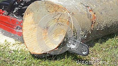 Tranches de coupe de rondin en bois avec une tron onneuse clips vid os vid o 43116793 - Couper bois avec meuleuse ...