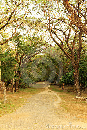 Tranquil Pathway
