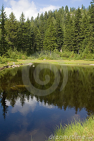 Tranquil pond in the forest