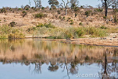 Tranquil waterhole in the wilderness