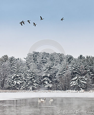 Free Tranquil Winter Landscape Royalty Free Stock Photo - 29278965