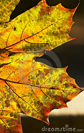 Transformations d automne