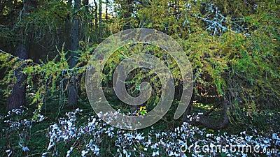 Transición de los arbustos a los árboles en el bosque metrajes