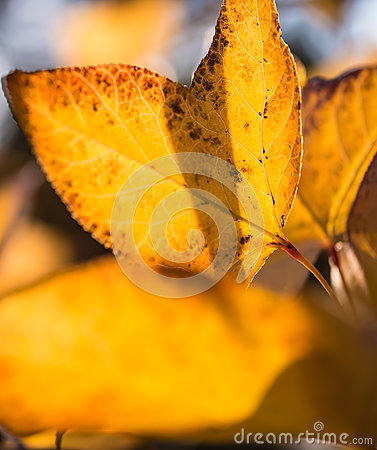 Transparent Leaves in Backlight