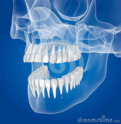 Free Transparent Scull And Teeth , Xray View Royalty Free Stock Photography - 83689477