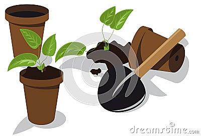 Transplanting flower seedlings