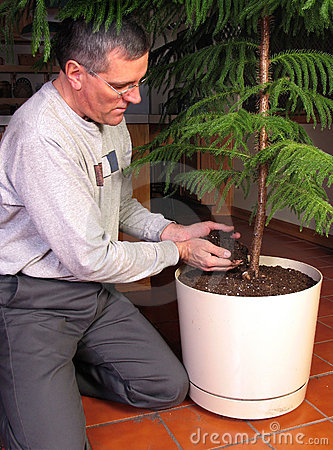 Transplanting a large houseplant