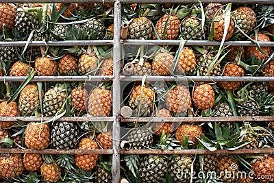 Transport of pineapple