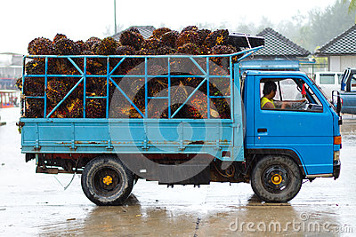 Transport of tropical fruits in Thailand Editorial Stock Photo