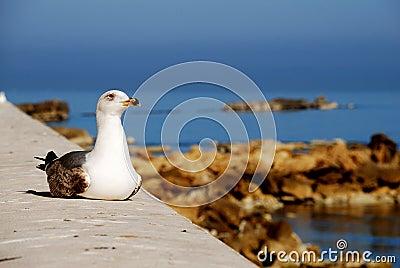 Trapani - seagull