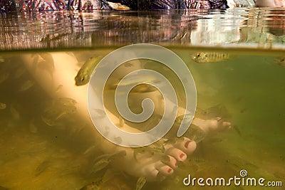 Tratamento dos cuidados com a pele do pedicure dos pés dos termas dos peixes
