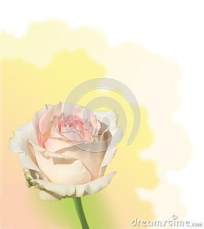 Trate color de rosa con suavidad