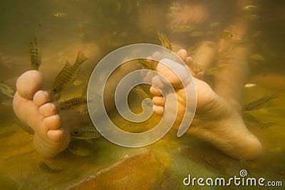 Trattamento di cura di pelle di pedicure dei piedi della stazione termale dei pesci