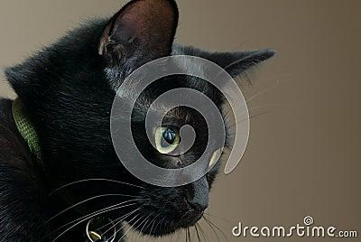 Traurige schwarze Katze