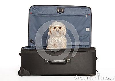 Travel Puppy