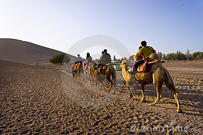 Traveler camels in desert Editorial Stock Photo