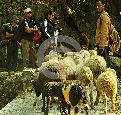 Travelers and locals at Himalayas Editorial Stock Photo