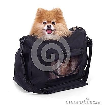 Free Traveling Stock Image - 1193241
