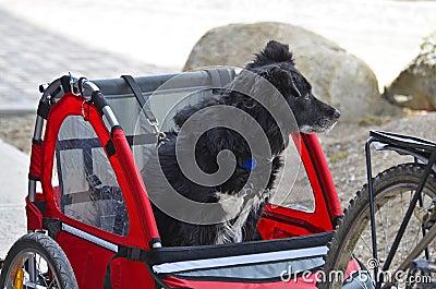 Traveling dog