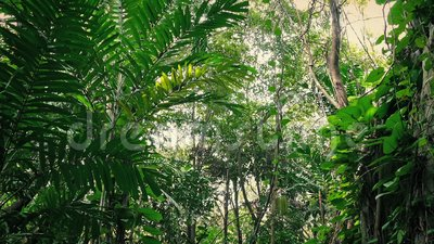 Traveling Past Overgrown Rock Face In The Jungle. Moving through the jungle past large rock covered in plants stock video footage